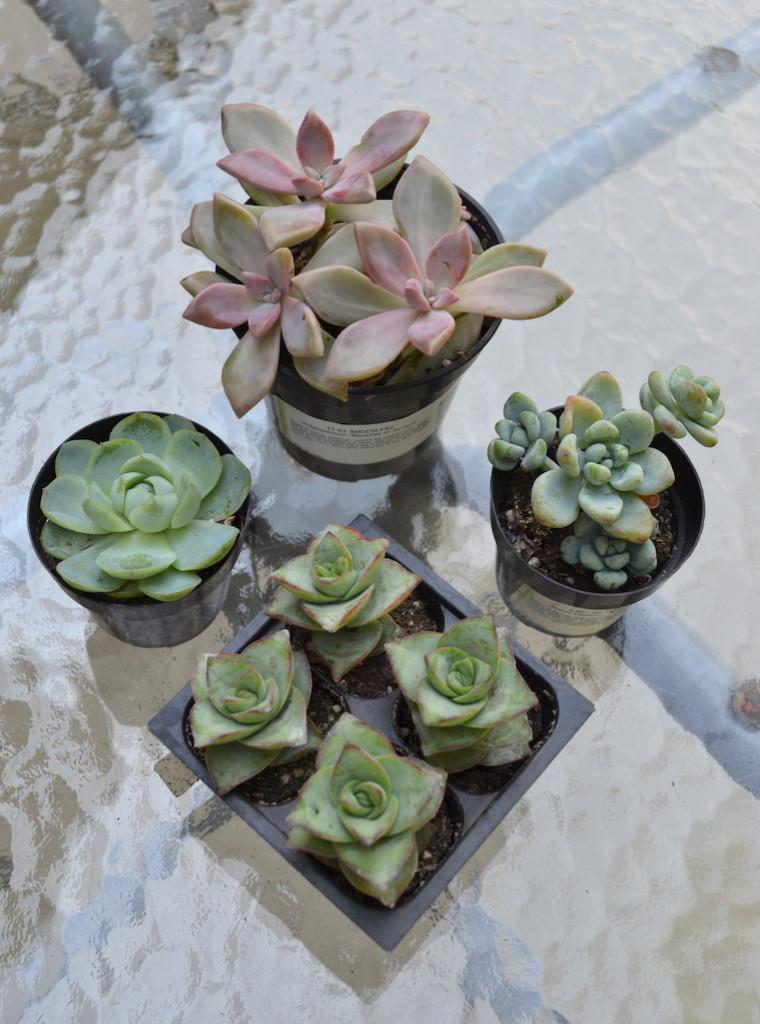 succulents chalk paint pots 11