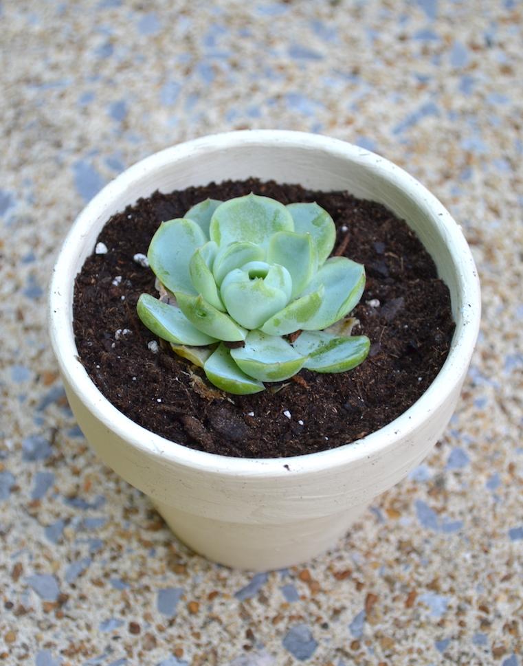 succulents chalk paint pots 12