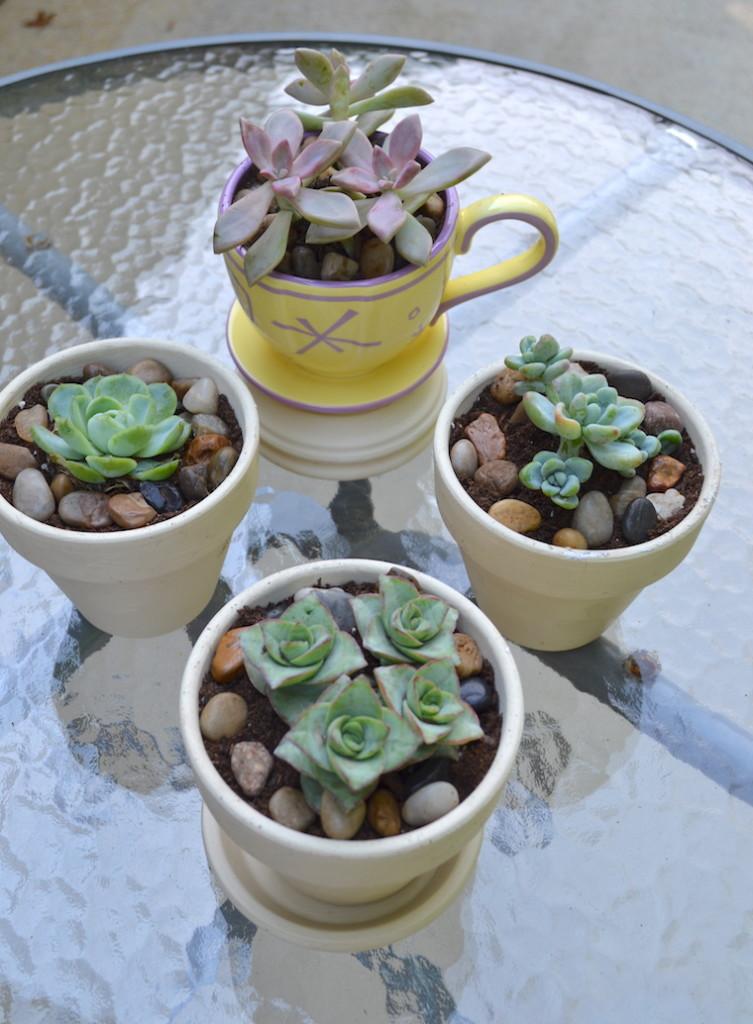 succulents chalk paint pots 13