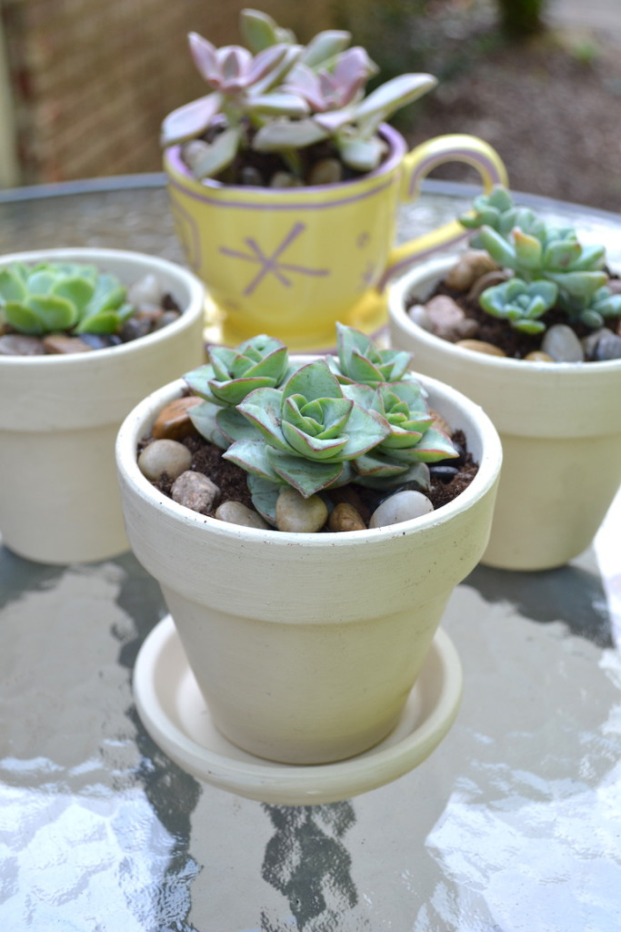 succulents chalk paint pots 14
