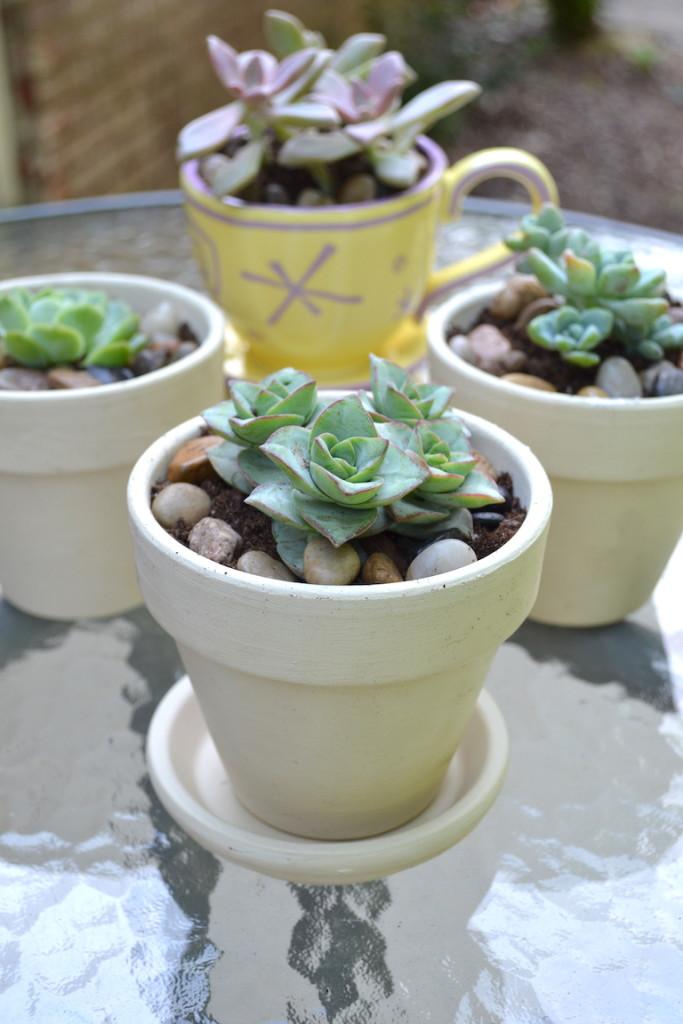 succulents chalk paint pots 14