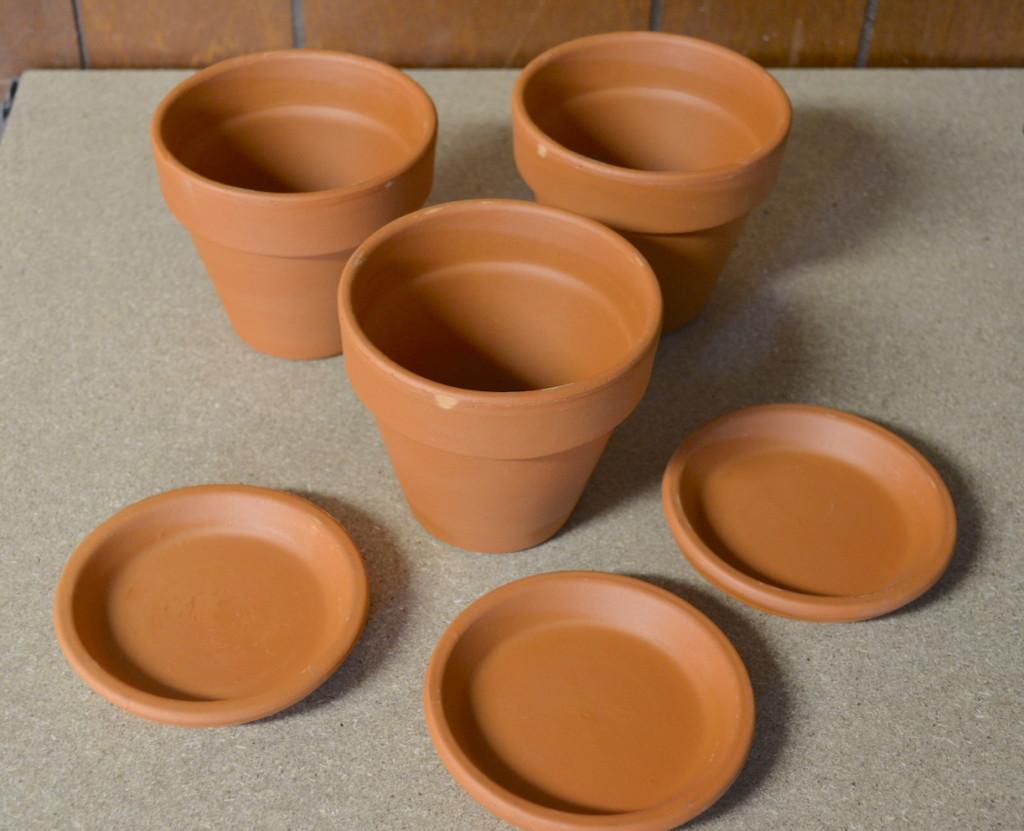 succulents chalk paint pots 2
