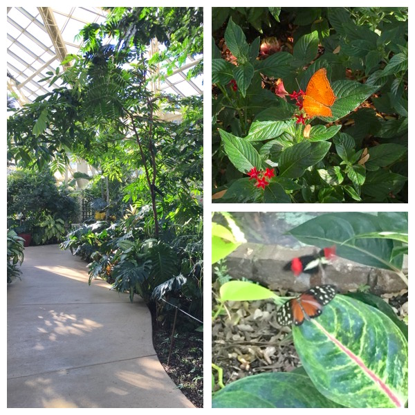 Cecil B Day Butterfly Center